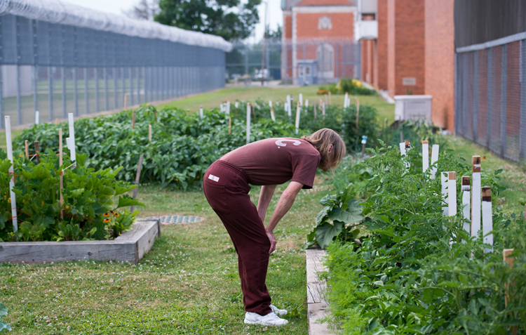 An inmate who tends the garden overlooks plants in the vegetable garden at SCI Cambridge Springs.