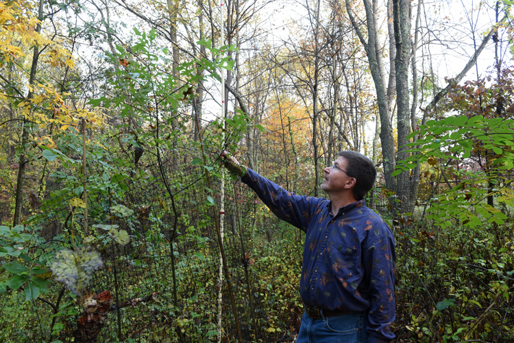 Jerry Andres measures a black oak he transplanted from his childhood home to the Pittsburgh Botanic Garden. It's a tribute to his father who passed away. Andres and his father spent lots of time in their forest together and this was a way to memorialize his dad.