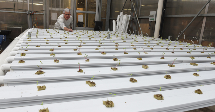 Gary Baranowski director of horticulture technology at Bidwell Training Center in Manchester with a hydroponic growing system filled with new sprouts of basil and greens.