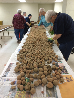 Nuns from the Sisters of Charity of Seton Hill sort potatoes grown at Seton Hill University in Greensburg. Sister Barbara Ann Smelko, coordinator of vocation ministry and outreach for the Sisters of Charity and Darren Achtzehn, food service director for Seton Hill University in Greensburg teamed up to grow potatoes at the university that were harvested and split between the dining hall at Seton Hill, the kitchen for the nuns and the Westmoreland County Food Bank.