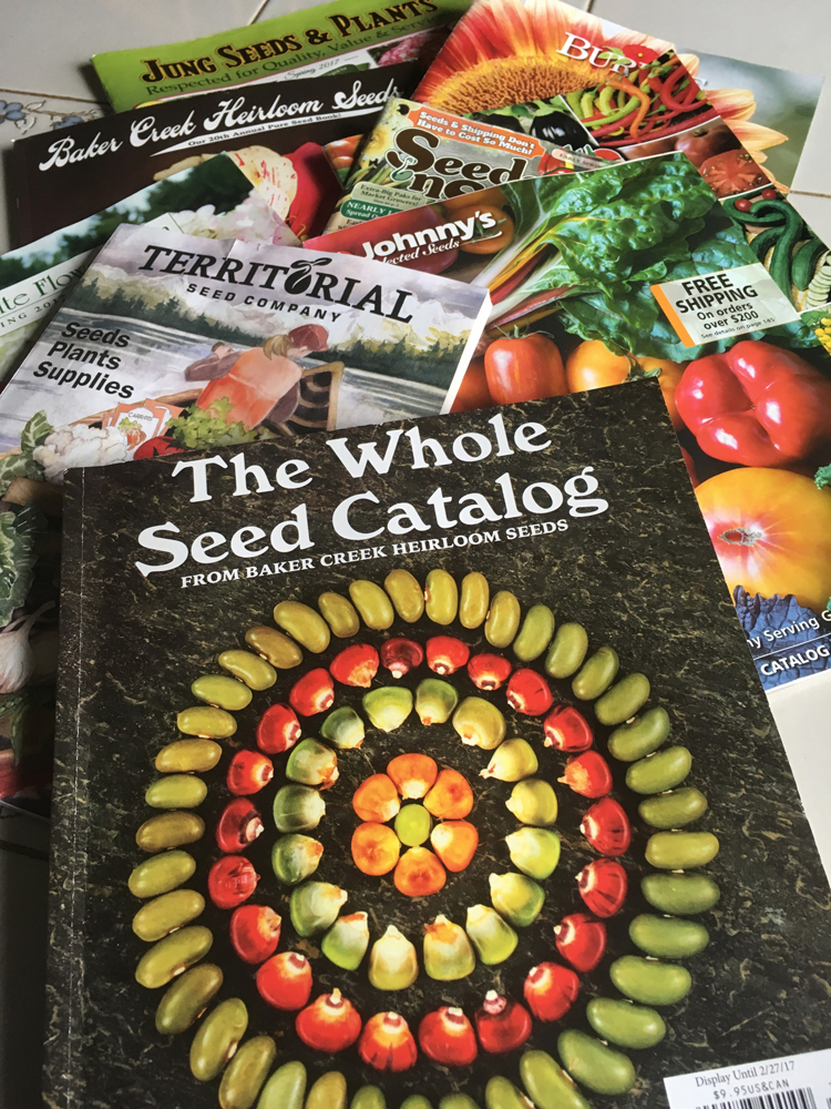Reading seed catalogs is what keeps gardeners sane during the winter. These are just a few fo them. Take time this winter to read as many as you can to discover new varieties for planting this spring.