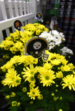 blog better blog steelers