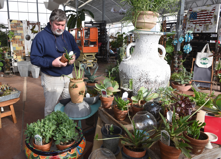 Tom McMeekin is president of Quality Gardens Inc. He's been growing succulents all his life and offers a wide array to varieties at his nursery in Valencia.