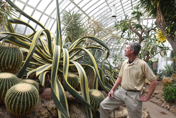 "Curtis Pesanka, indoor display foreman at Phipps Conservatory and Botanical Gardens grew this huge agave from a small pup taken from a plant that had gotten too big for the space it was growing in. It's Agave americana 'Variegata.' Children who visit the Desert Room refer to it as ""The Octopus Cactus."""