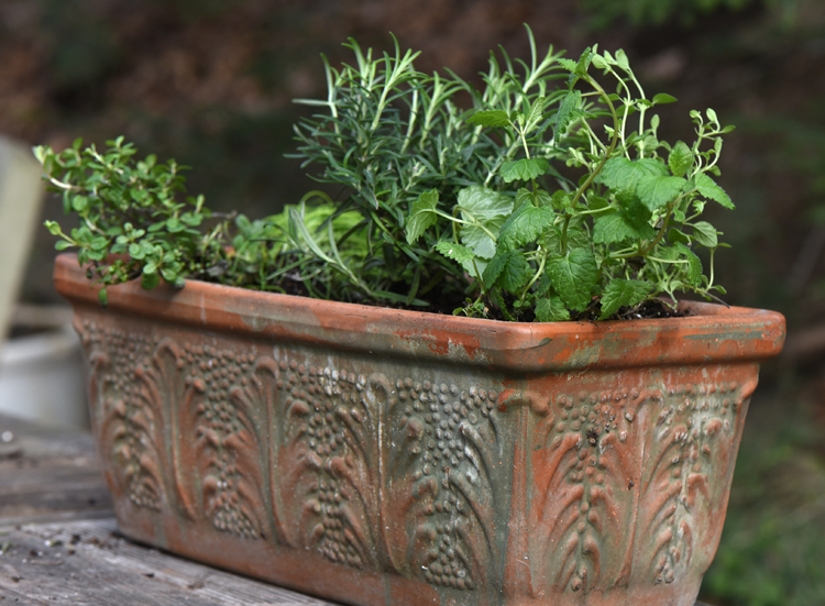 This planter is filled with herbs that will grow inside on a windowsill in the winter and then go outside for the summer. This one is planted with rosemary, chives, oregano and other herbs. A terra cotta planter will age with a nice patina.