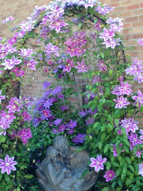 beautiful blooming clematis vines climbing an arbor in front of the dining room at Holy Family Manor in Bellevue