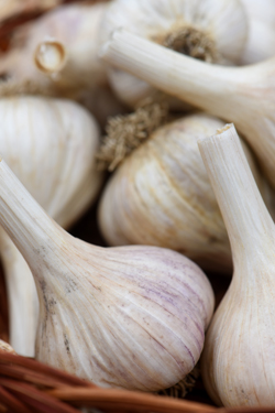 There are many types of garlic, each one offers something different when it comes to taste and heat level.
