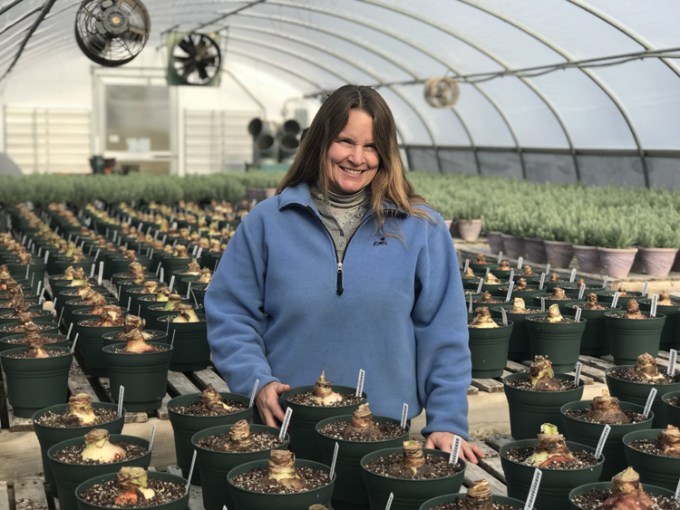 Cheryl Whalen is head gardener at White Flower Farm and in charge of a greenhouse filled with amaryllis bulbs. Indoor bulbs get us through the winter.