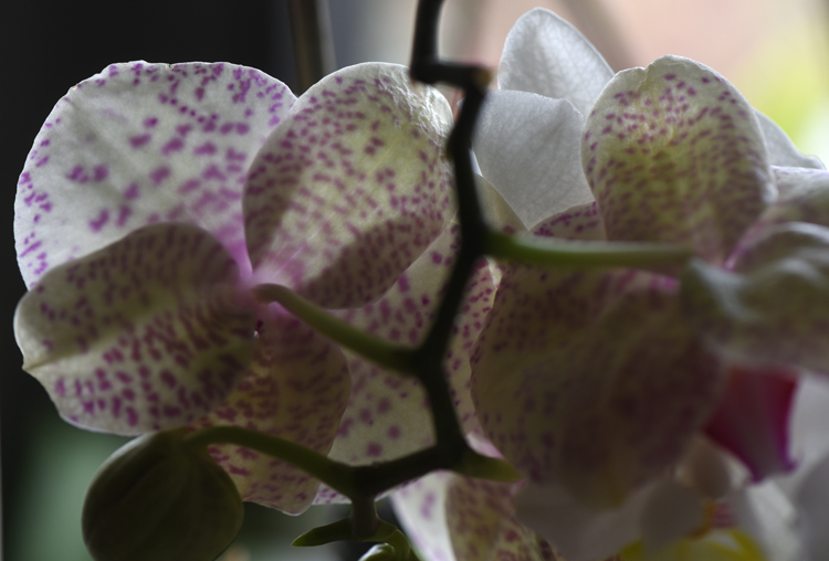 Glenn and Phyllis Ribblett of Baldwin have had to change the way they garden over the years. Phyllis had a stroke two years ago and Glenn is partially blind. Phyllis loves orchids and they bloom happily on the front windowsill. Gardening is a big part of their lives together.