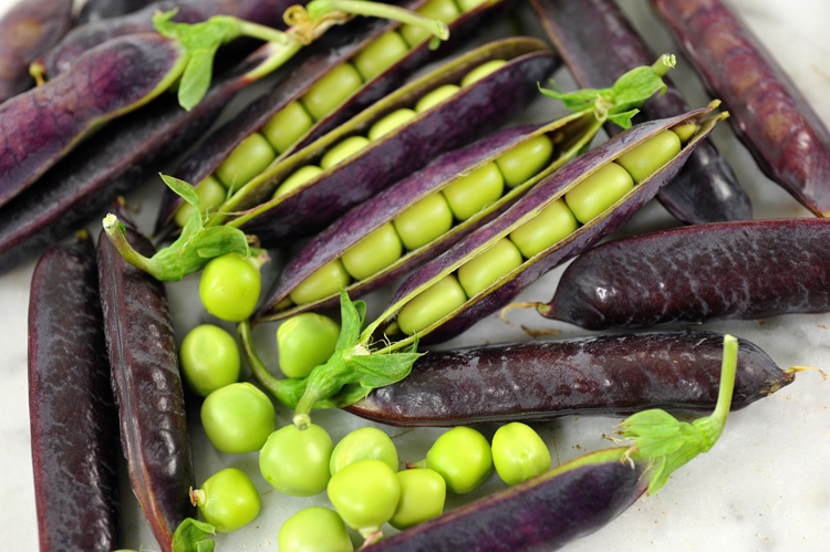 'Purple King Tut' is a pea that was discovered in the tomb of Tutankhamun for Baker Creek Heirloom Seeds. seed catalogs