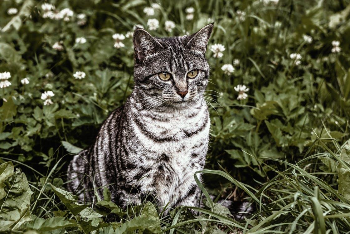 Cats can act as a predator