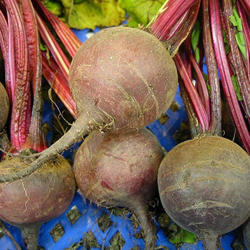 'Early Blood Turnip-rooted Beet' It's similar to beets that Thomas Jefferson grew at Monticello.