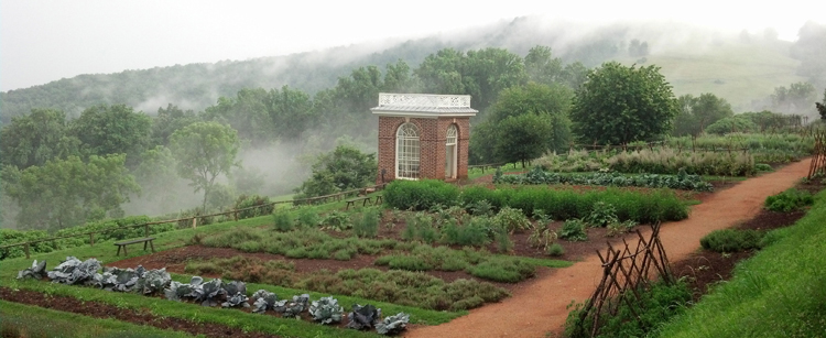 The garden at Monticello is filled with historic plants.