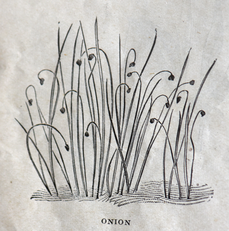 "Henderson's Garden Guide from 1913 was sent to customers of Pete Henderson & Co. who's motto was ""Everything for the Garden."" This illustration shows what onions look like when they sprout. Vintage gardening"