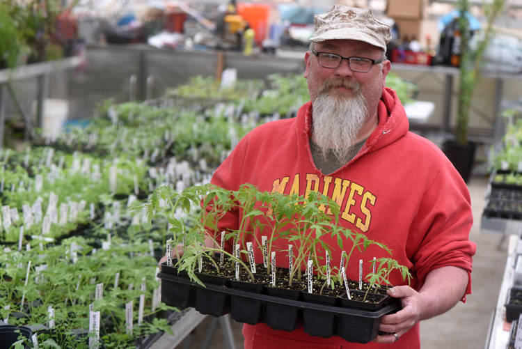 Robert Stone, program and property coordinator at Angora Gardens in White Oak holds a flat of 'Oxheart' tomatoes which were started by clients with his help. They will be available on May 12 from 10 a.m. until 2 p.m. at the Angora Gardens' Plant Sale.