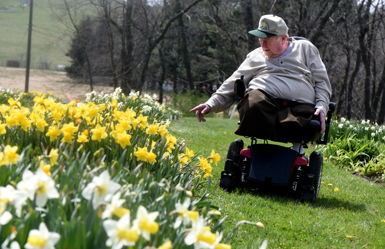 Joseph Hamm looks at some of the flowers at his Daffodil Hortus in Washington County. It's one of the greatest collections of daffodils in the state.