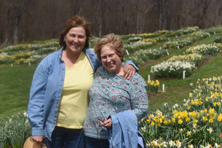 "Georgine Materniak and Carol Stough are the ""field sisters at Joseph Hamm's Daffodil Hortus in Washington County. It's one of the greatest collections of daffodils in the state."