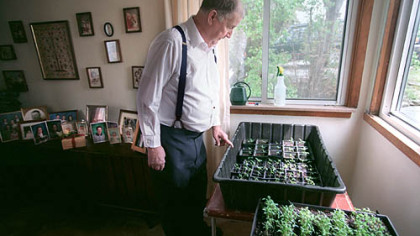 The late Fred Limbaugh looks over some of his 'Potato Top' tomatoes.