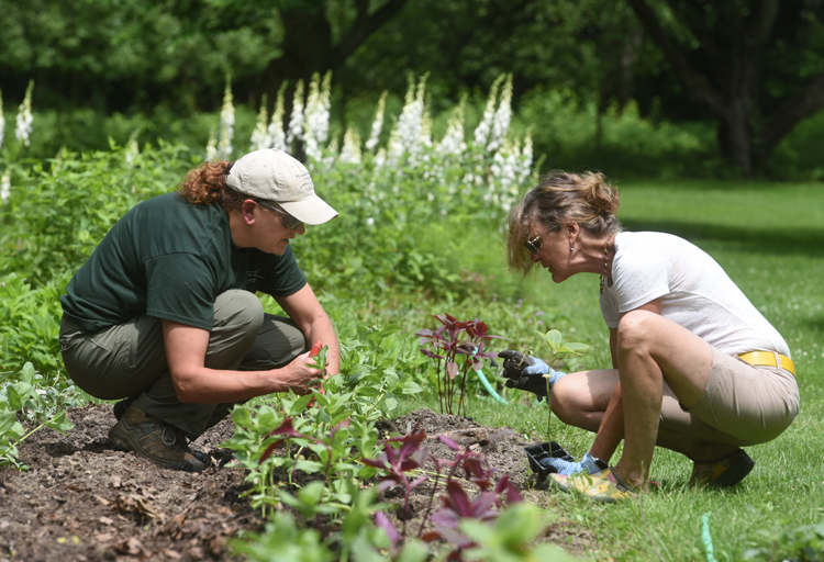 Fallingwater horticulturist Ann Talarek works with Nell Gardener who is horticulturist at two other Frank Lloyd Wright houses, the Darwin Martin House and Graycliff Estate. The two are planting a new cutting garden at Fallingwater.