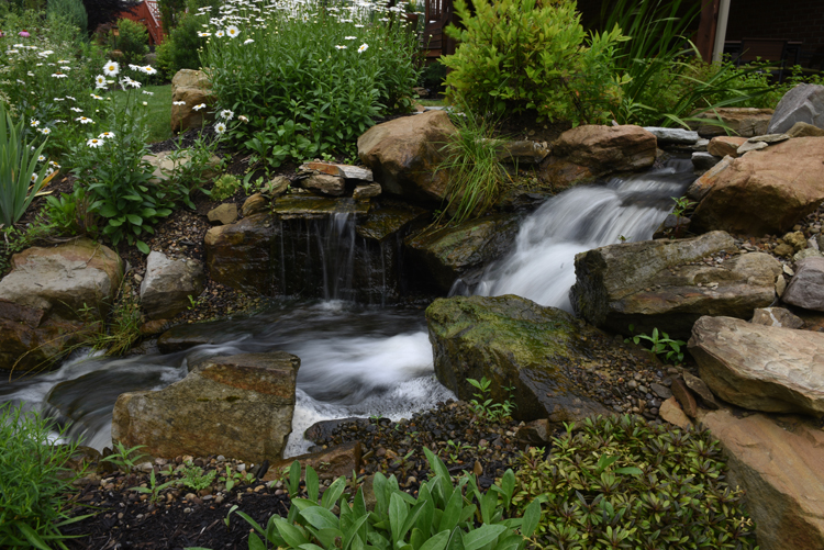 Scott and Catie Walsh of Sewickley Hills have a wonderful water garden that's part of the Wexford Pond Tour. The water garden is like a retreat for the young family.
