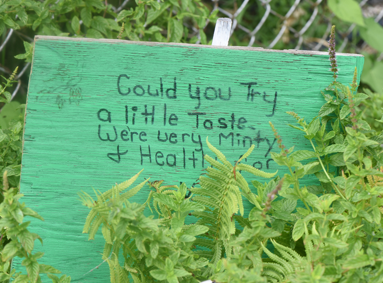 Beverly Howell has turned a vacant lot next to her Homewood property into a children's garden with the help of Grounded. The landscape is filled with her handmade signs encouraging children to explore the garden.