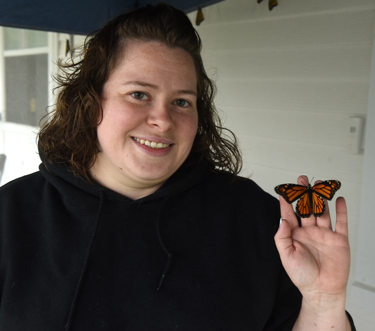 Karrie Klug of Slickville, Pa in Westmoreland County has been raising monarch butterflies from eggs and caterpillars in an effort to help the species. She hopes to release around 200 by the end of the season.