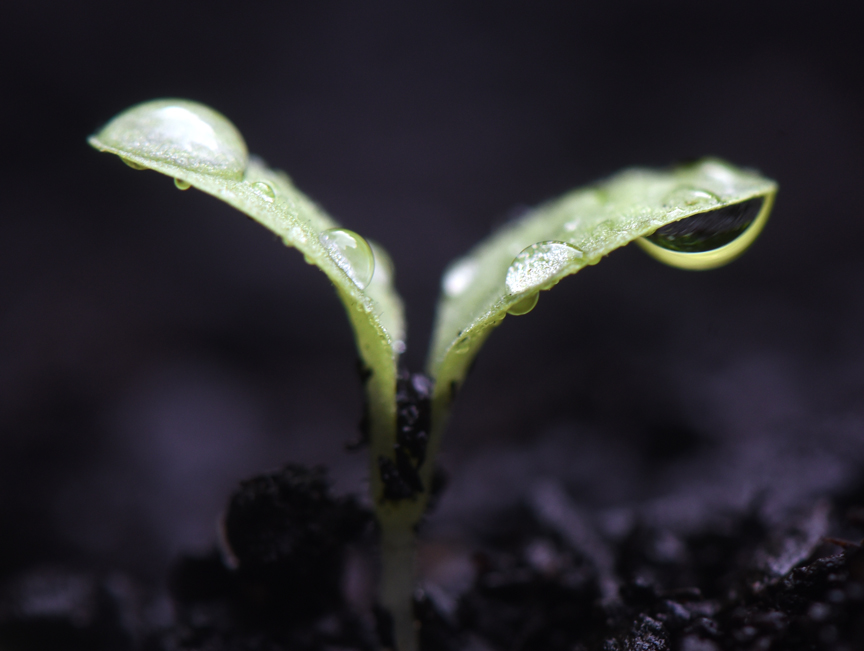Starting seeds is one of the wonderful things about gardening.