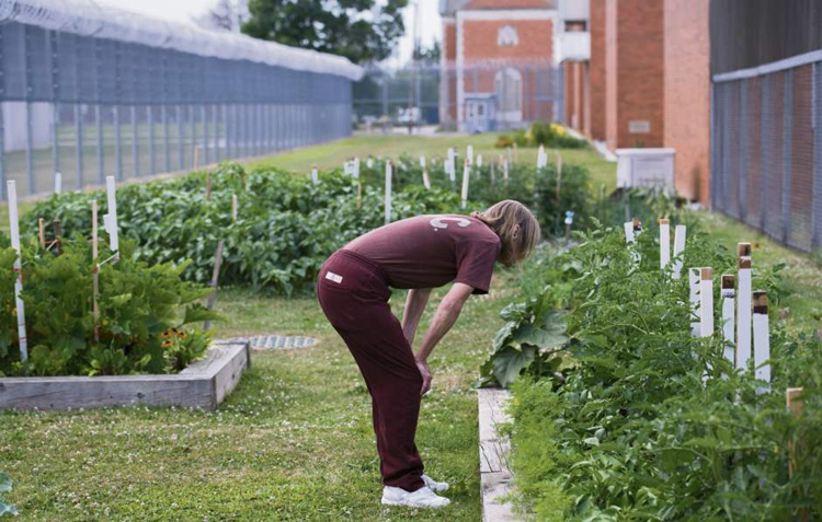 An inmate looks over the garden at SCI Cambridge Springs.