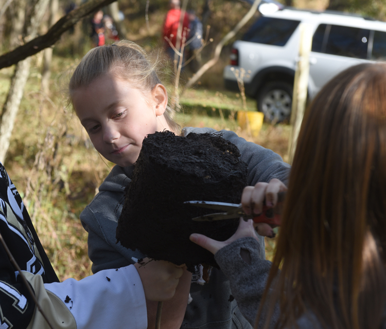 Lexi Spivak, 11, a student from Ross Elemetary loosens the roots of a tree she's about to plant as part of a One Tree Per Child Pittsburgh event in Sangree Park in Ross.