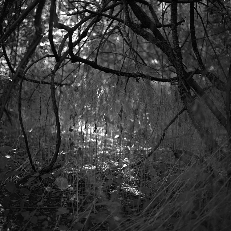 """Woodlands #52"" is one of the works of Sue Abramson in her book 'The Woodlands Journal. She has spent most of her life photographing in the forest and has used her work as a way to heal. This photo was shot in 2006 after her husband Kevin Kelly had passed away."