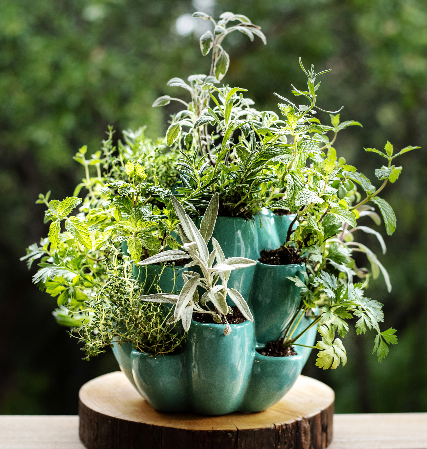 The Cacti and Succulent Pot can be filled with succulents, herbs or flowers.