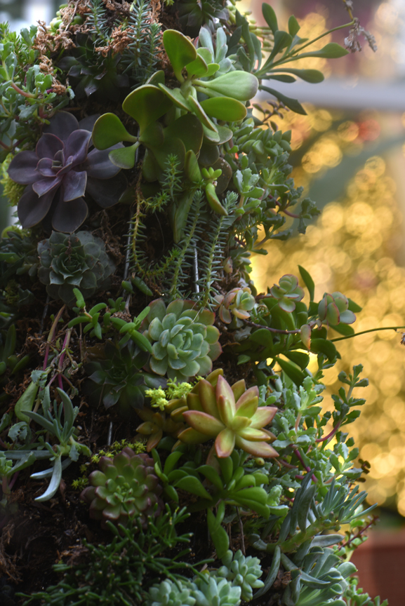 Phipps' Winter Flower Show should be explored at a relaxed pace to reveal the attention to detail like this holiday tree made of succulents.