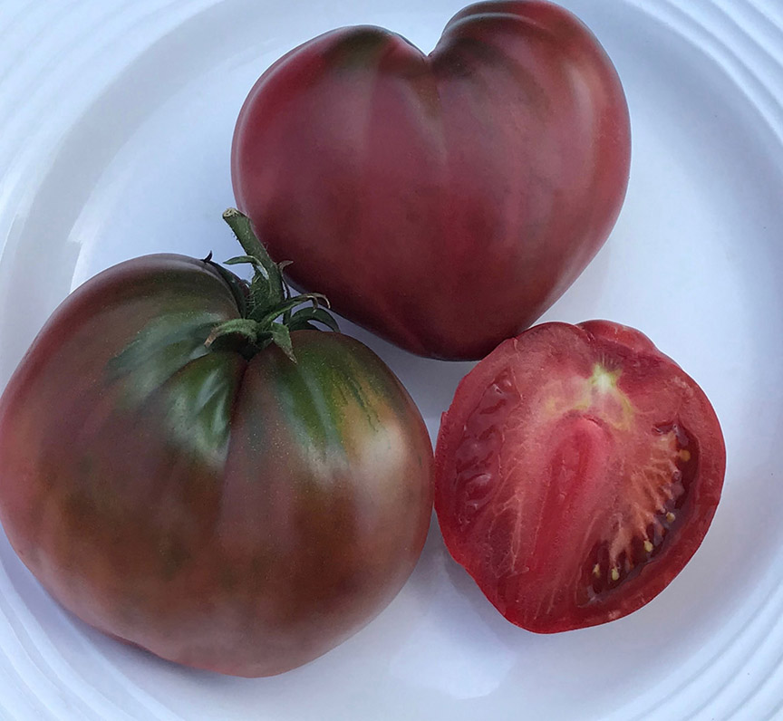 Dagma Lacey and Gary Ibsen run TomatoFest, a company that offers 650 different heirloom tomatoes to gardeners. Most of the seeds they grow are donated to schools and others who need help. 'Dwarf Purple Heart' is part of new series of tomatoes that stay small.