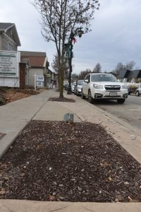 David Krayesky and Luke Gregory have teamed up to try and replant the town of Slippery Rock with a variety of street trees. Here you can see where a pear tree is missing.