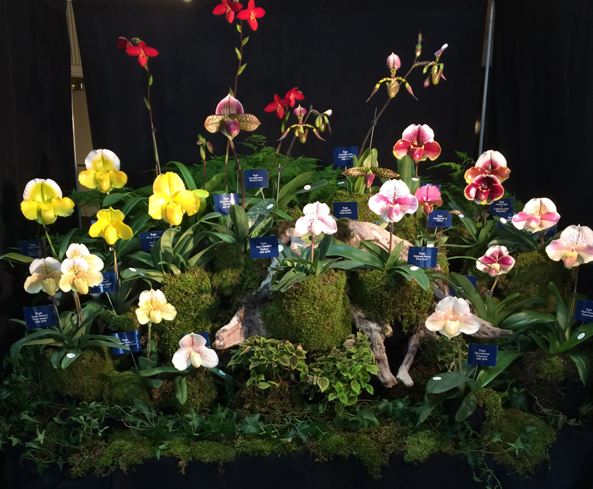 The Orchid Society of Western Pennsylvania's annual Orchid Show has a new location in Mt. Lebanon. This is one of the displays from a previous year. Photos by Katie Shuller