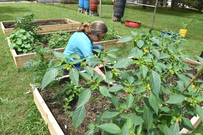 Andrea Woodhall, an Armstrong County Penn State master gardener, has helped the Vandergrift Parent Project with their children's garden in Franklin Park.