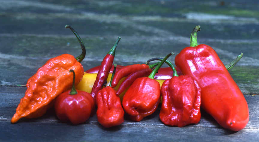 These hot peppers include some of the hottest in the world. To enjoy the wonderful flavor, you have to take the heat.