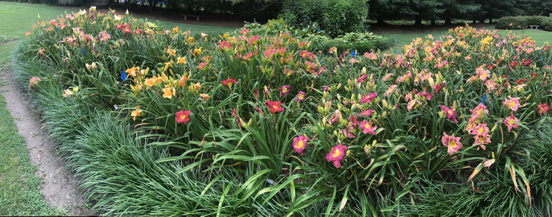 Sarah and Steve Zolock have introduced over 165 named varieties of daylily and more than 50 new hostas. The couple has gardened at their Rostraver home for decades but are getting ready to sell and downsize. This is just one of the wonderful beds filled with daylilies at their home.