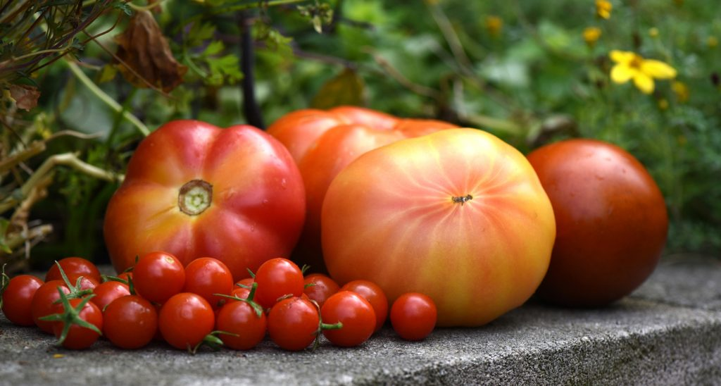 Donate your fresh produce to the Greater Pittsburgh Community Food Bank at this year's Tomato and Garlic Day held at Phipps.