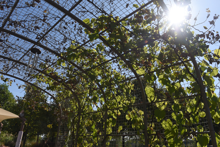 The vine tunnel is one of the features in the Sensory Garden at Pioneer Education Center in Pittsburgh.