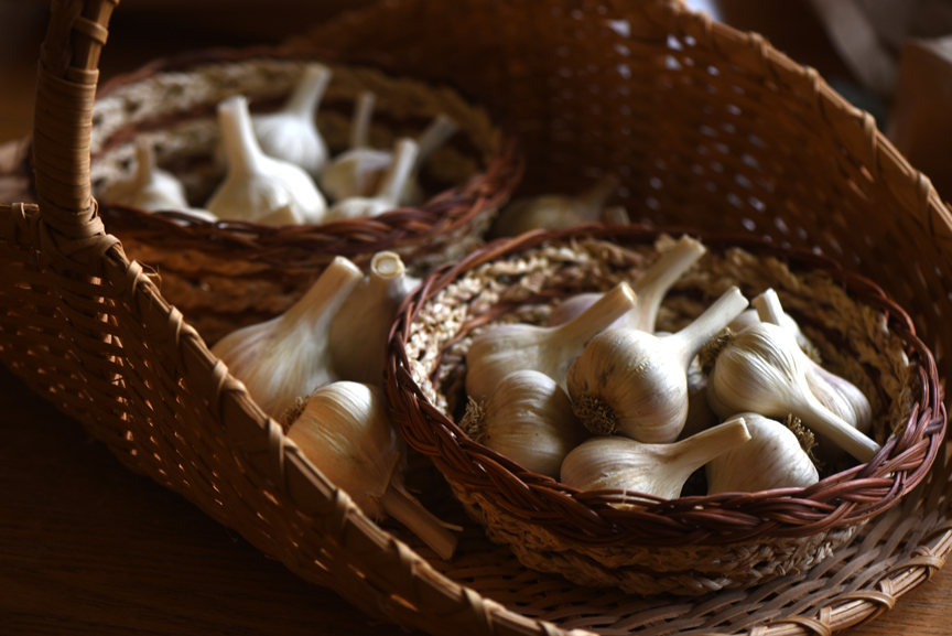 t's important to start with the right type of garlic, not varieties from the grocery store.