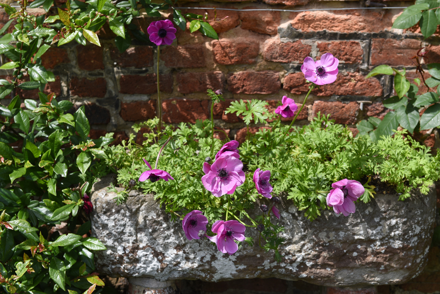 Poppies are great perennials that will even work in containers.