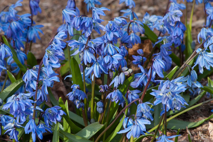 Everyone wants blue in the garden!