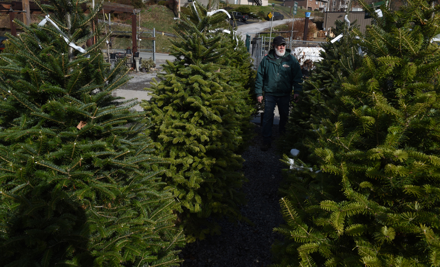 Dwayne Evans is owner and manager of Best Feeds Garden Center on Babcock Blvd. in Ross. He recommends that people tree using a live tree for their holidays.