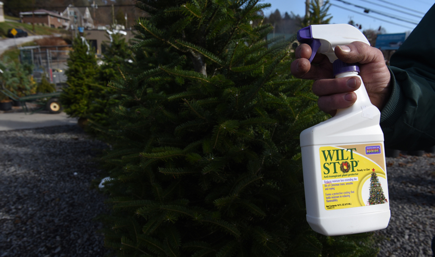 Dwayne Evans is owner and manager of Best Feeds Garden Center on Babcock Blvd. in Ross. He recommends that people tree using a live tree for their holidays. Wilt Stop will help prevent the tree from transpiring moisture.