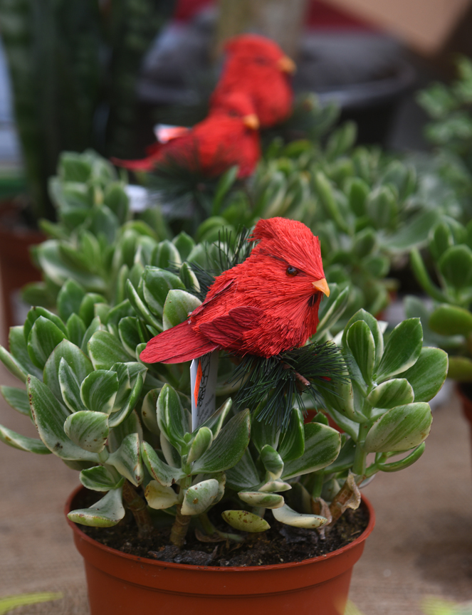 11 Best Christmas Plants Unique And Traditional Varieties For The