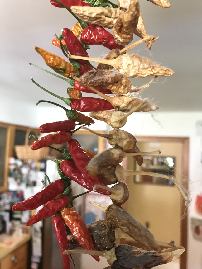 Dave Taiclet of Ross has peppers drying all through his kitchen.