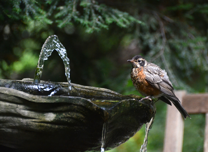 Water is an essential ingredient in attracting birds. Use a heater during the winter to make water available for the birds.