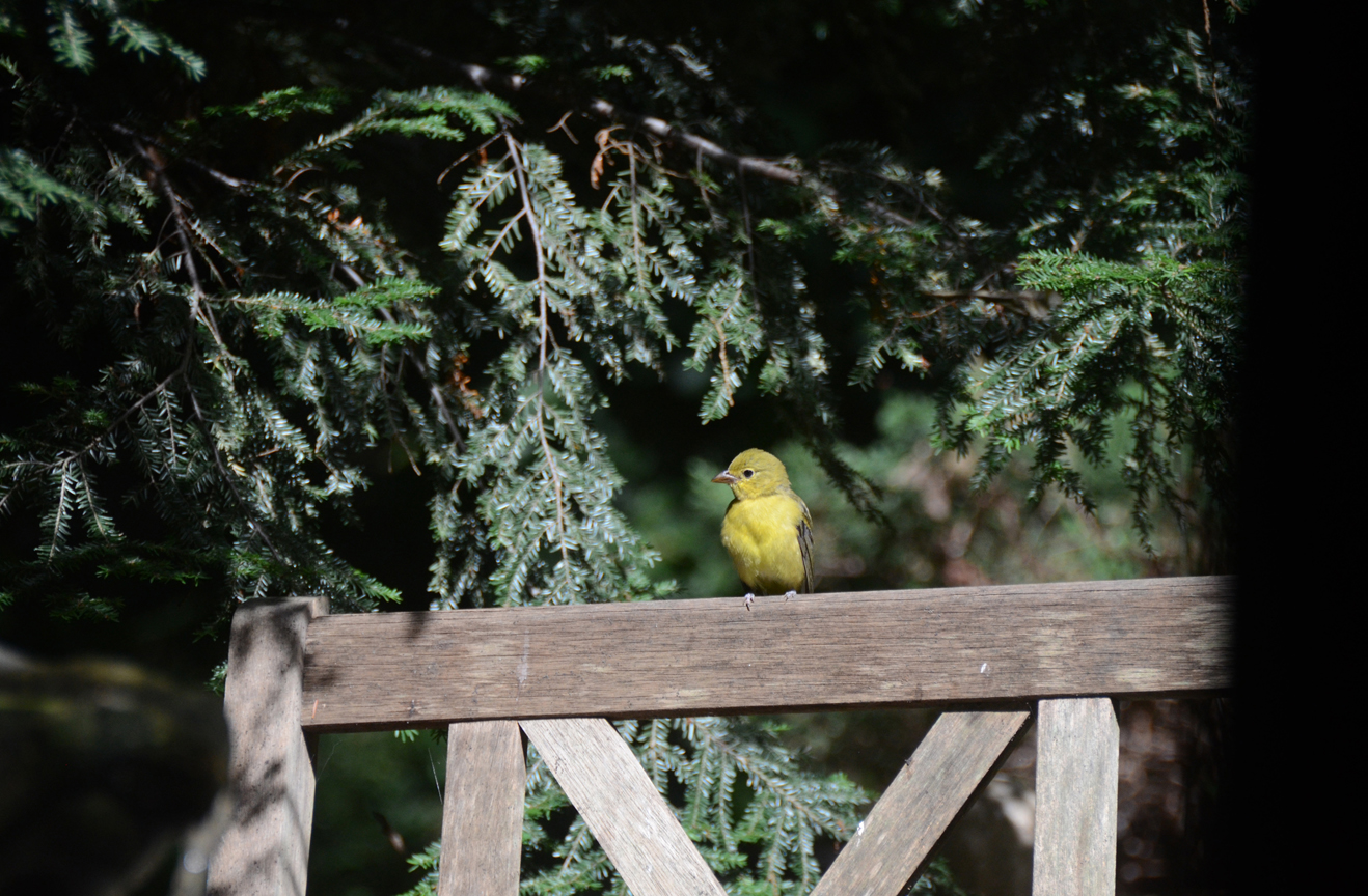 One of the best part of attracting birds to the garden is simply watching them.