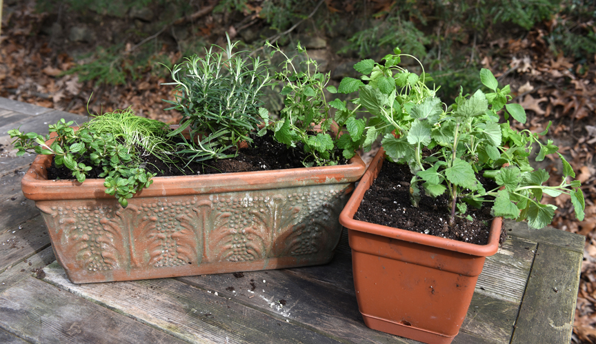 These two planters are filled with a variety of herbs that will be grown indoors during the end of the winter, then taken outside for the summer.
